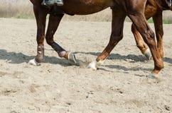 Cavallo e cavaliere di Dressage Immagini Stock Libere da Diritti