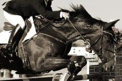 Cavallo e cavaliere equestri nell'azione Fotografia Stock