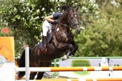 Cavallo e cavaliere nel corso di salto Fotografie Stock