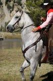 Cavallo e cavaliere Prancing Fotografie Stock Libere da Diritti