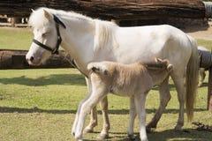 Cavallo e cavallo del bambino Immagini Stock