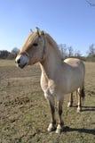 Cavallo e cielo blu Fotografie Stock