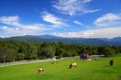 Cavallo e cielo blu del plateau immagine stock