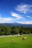 Cavallo e cielo blu del plateau fotografia stock libera da diritti