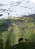Cavallo e foal su un fianco di una montagna Fotografia Stock