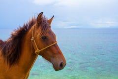 Cavallo e foto di vacanze estive del mare Primo piano della testa di cavallo di Brown Animale da allevamento adorabile Fotografie Stock