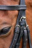 Cavallo e freno Immagini Stock