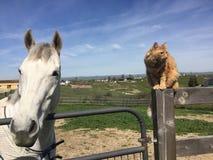 Cavallo e gatto Immagini Stock