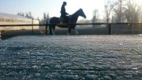Cavallo e gelo sul banco Immagini Stock