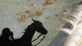 Cavallo e la sua puleggia tenditrice Immagini Stock