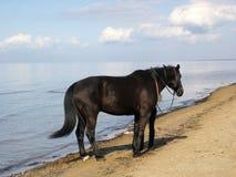 Cavallo e mare. Fotografie Stock
