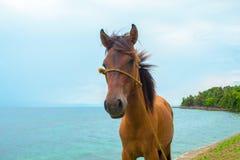 Cavallo e paesaggio del mare Foto di viaggio Primo piano della testa di cavallo di Brown Fotografia Stock
