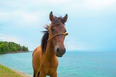 Cavallo e paesaggio del mare Foto di viaggio Primo piano della testa di cavallo di Brown Animale da allevamento adorabile Immagine Stock Libera da Diritti