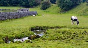 Cavallo e pecore in un campo Immagini Stock Libere da Diritti