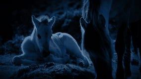 Cavallo e puledro che pascono nella luce della luna archivi video