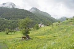 Cavallo e puledro nel paesaggio verde dei alpes de Provenza vicino al ubaye del sur di St Paul Fotografie Stock Libere da Diritti