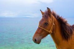 Cavallo e seaview Foto di viaggio Primo piano della testa di cavallo di Brown Animale da allevamento adorabile Immagini Stock Libere da Diritti