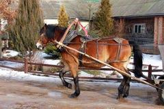 Cavallo e trasporto Fotografie Stock Libere da Diritti