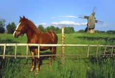 Cavallo con il mulino a vento. Immagini Stock Libere da Diritti