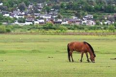 Cavallo e villaggio fotografie stock libere da diritti
