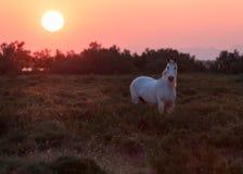 Cavallo ed alba Immagini Stock