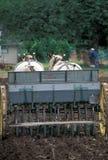 Cavallo ed aratro Fotografie Stock Libere da Diritti