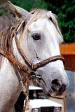 Cavallo ed automobile Fotografia Stock