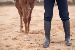 Cavallo ed equestrian fotografia stock