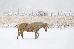Cavallo elettrico Fotografia Stock