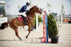 Cavallo equestre Rider Jumping Rappresenti la mostra del concorrente che esegue nella concorrenza di salto di manifestazione Immagine Stock