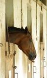 Cavallo faticoso fotografia stock