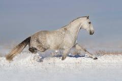 Cavallo fatto funzionare in neve fotografia stock libera da diritti