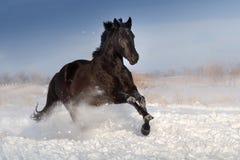 Cavallo fatto funzionare su neve fotografia stock