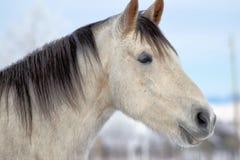 Cavallo felice fotografia stock libera da diritti