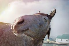 Cavallo felice Immagini Stock