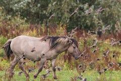 Cavallo fra gli uccelli Immagini Stock
