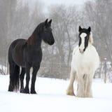 Cavallo frisone e pannocchia irlandese nell'inverno Fotografia Stock Libera da Diritti
