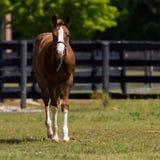 Cavallo futuro di manifestazione fotografia stock