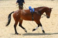 Cavallo galoppante Fotografia Stock Libera da Diritti
