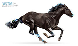 Cavallo galoppante Cavallo arabo Ritratto che sta contro il isolat Fotografie Stock Libere da Diritti