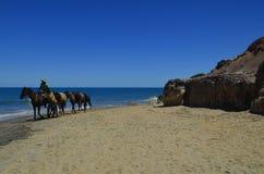 A cavallo giro alla spiaggia un giorno soleggiato fotografia stock libera da diritti