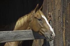 Cavallo in granaio Fotografia Stock Libera da Diritti