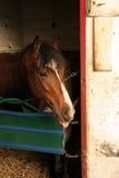 Cavallo in granaio Immagini Stock Libere da Diritti