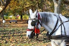 Cavallo grazioso Fotografie Stock Libere da Diritti