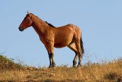 Cavallo grazioso fotografia stock libera da diritti