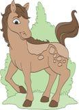 Cavallo grazioso di Brown Immagini Stock Libere da Diritti