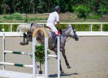 Cavallo grigio pezzato e cavaliere in camicia bianca sopra un salto immagini stock libere da diritti