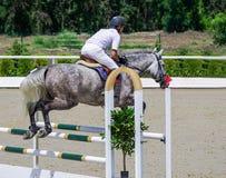 Cavallo grigio pezzato e cavaliere in camicia bianca sopra un salto fotografia stock