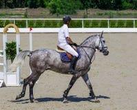 Cavallo grigio pezzato e cavaliere in camicia bianca sopra un salto immagine stock