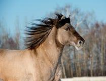 Cavallo grigio selvaggio Fotografie Stock